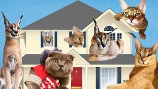 Частный дом для 8 диких кошек - 700 м2 для кошачьих игр, Территория кошек Sauvage