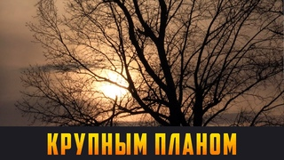 КРУПНЫМ ПЛАНОМ - Забота об экологии. Выпуск  (12+)