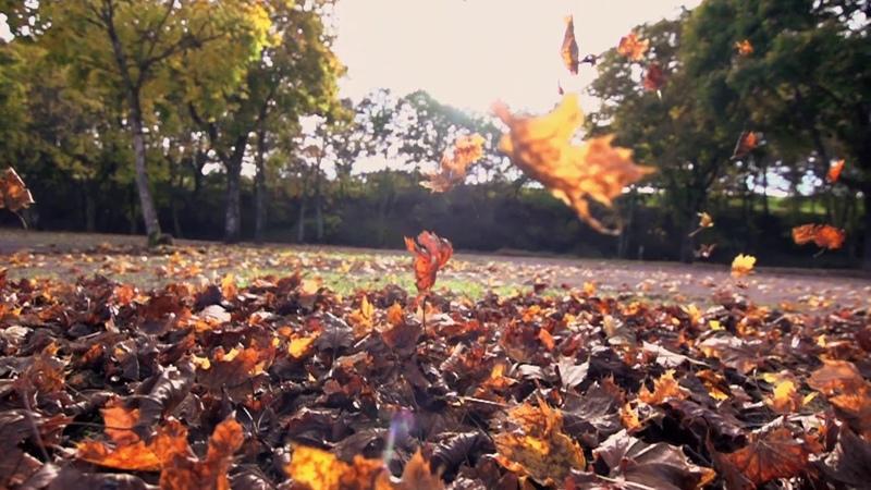 Осень футажи с мелодией листопад осень в лесу горы дорога дождь