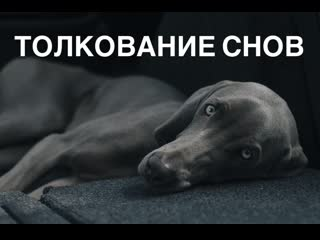Толкование снов | Кусает собака во сне | Ночной кошмар