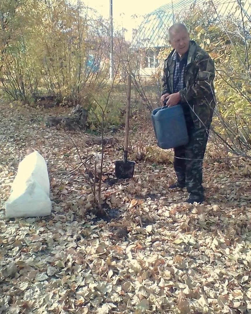 В Петровске высадили саженцы липы и клёна на аллее около дороги, прилегающей к детскому саду №11 «Лучик»